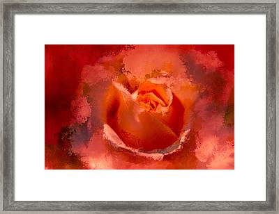 Watercolor Rose 4 Framed Print