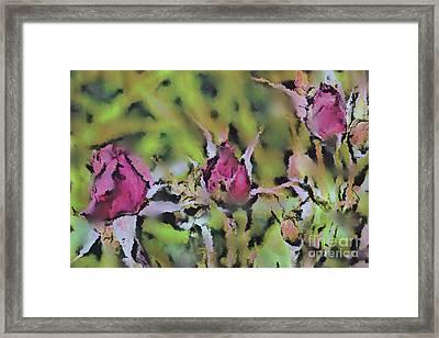 Watercolor Rosebuds  Framed Print