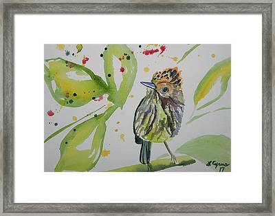 Watercolor - Scale Crested Pygmy Tyrant Framed Print