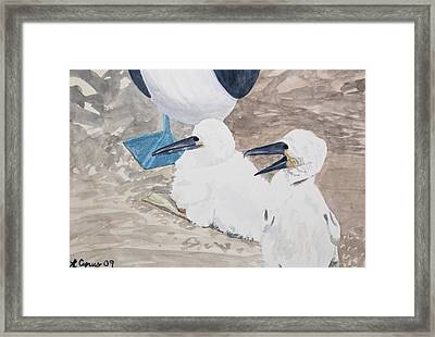 Watercolor - Young Blue-footed Boobies Framed Print by Cascade Colors