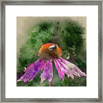 Watercolour Painting Of Bumble Bee Pollenating On Echinacea Pall Framed Print