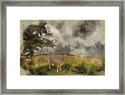 Watercolour Painting Of Farm Sheep In Landscape On Stormy Summer Day Framed Print by Matthew Gibson