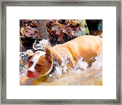 Waterdog Framed Print by John Toxey