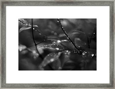 Waterdrops In The Morning Framed Print by Jake Marvin