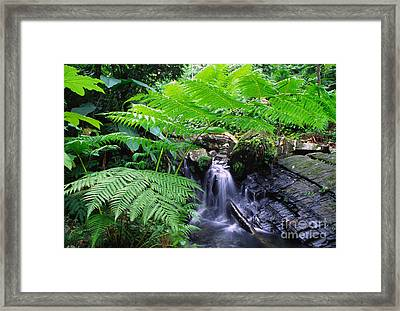 Waterfall And Tree Fern Framed Print by Thomas R Fletcher