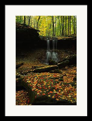 Fallen Leaf On Water Photographs Framed Prints