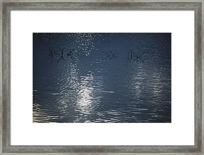 Waterfowl Wakes - Lake Isabella Framed Print by Soli Deo Gloria Wilderness And Wildlife Photography