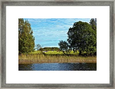 Waterfront Pasture Framed Print