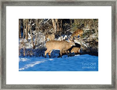 Waterhole Gathering Framed Print