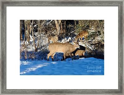 Waterhole Gathering Framed Print by Sandra Updyke