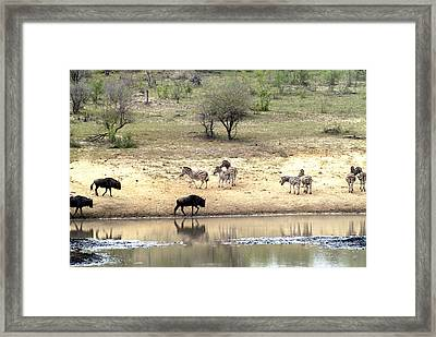 Watering Hole Framed Print by Charles  Ridgway