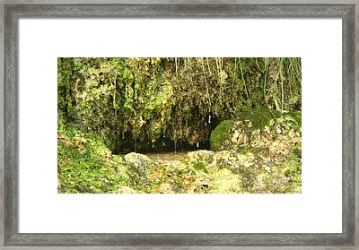 Watering Hole Framed Print