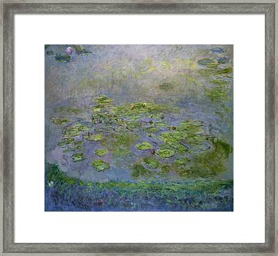 Waterlilies 1914-17 Framed Print