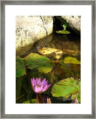 Waterlilies 2 Framed Print by Donna McLarty