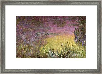 Waterlilies At Sunset Framed Print