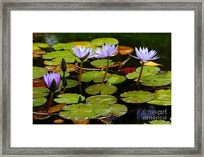 Waterlilies Framed Print by Gaspar Avila