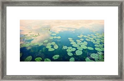Waterlilies Home Framed Print