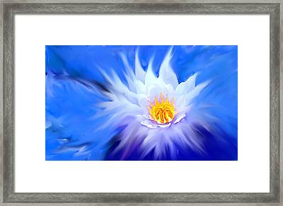 Waterlillies Transformed Framed Print by Ian  MacDonald