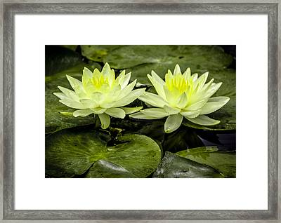 Waterlily Duet Framed Print by Venetia Featherstone-Witty