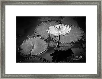 Waterlily Elegance 2 Framed Print by Liesl Walsh