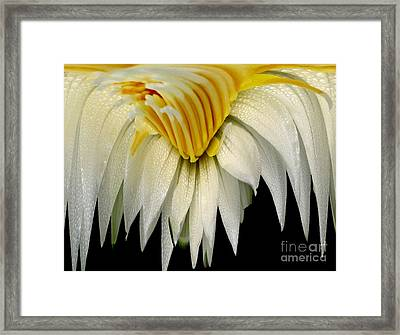 Waterlily Flower Abstract Framed Print by Rose Santuci-Sofranko
