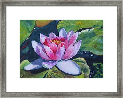 Waterlily II Framed Print