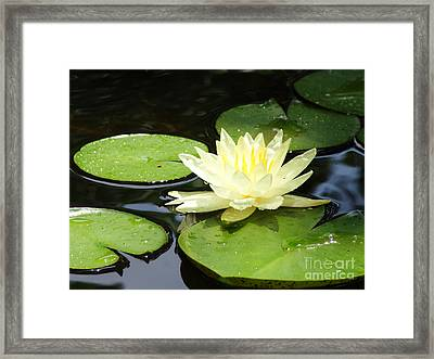 Waterlily In Yellow Framed Print by Tonya Laker