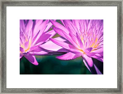 Waterlily Twins Framed Print