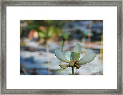 Waterlily Wash Horizontal Framed Print