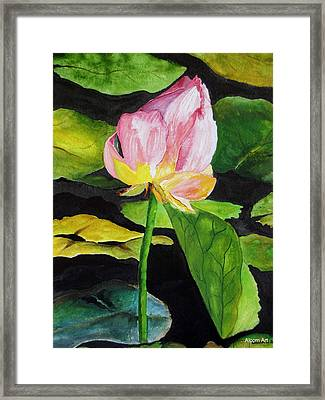Waterlily Watercolor Framed Print by Brenda Alcorn