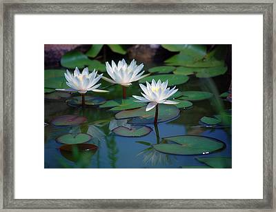 Waterlilys Framed Print