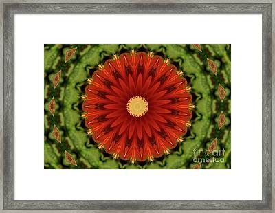 Watermelon Delight Framed Print by Sheila Ping