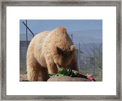 Framed Print featuring the photograph Watermelon For Dessert by Jeanette Oberholtzer