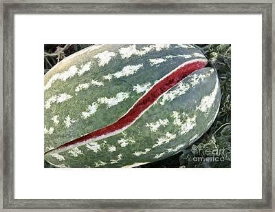Watermelon Framed Print by Inga Spence