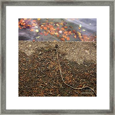 Water's Edge Framed Print by Bernard Jaubert