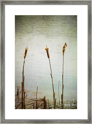 Framed Print featuring the photograph Water's Edge No. 2 by Todd Blanchard