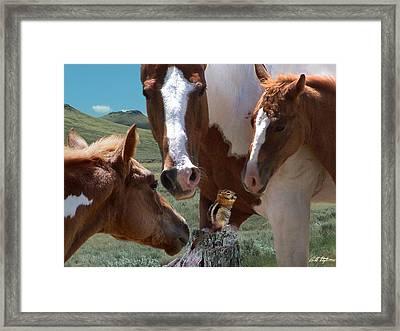 Watizit Framed Print by Bill Stephens