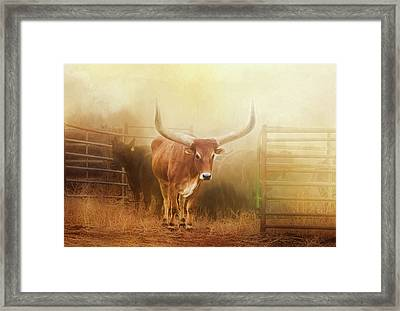 Watusi In The Dust And Golden Light Framed Print