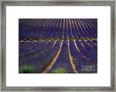 Waves Of Lavender Framed Print