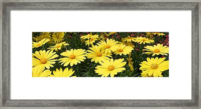 Waves Of Yellow Daisies Framed Print