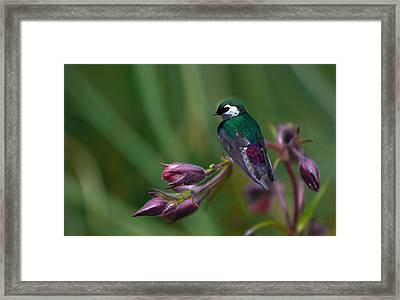 Wavey Perch Framed Print