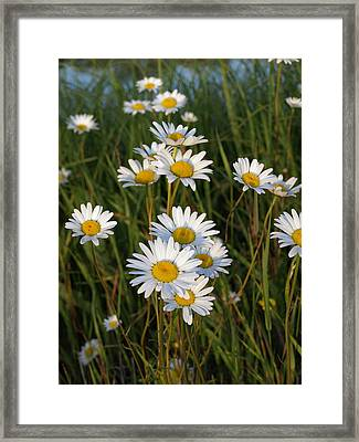Waving In The Wind Framed Print by Stan Wojtaszek