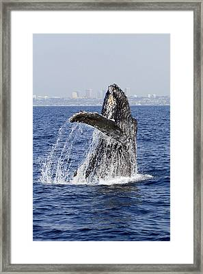 Waving  Framed Print by Shoal Hollingsworth