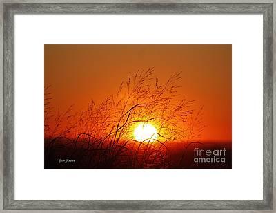Waving Sun Framed Print by Yumi Johnson