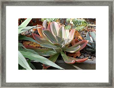 Framed Print featuring the photograph Wax Rose by Deborah  Crew-Johnson