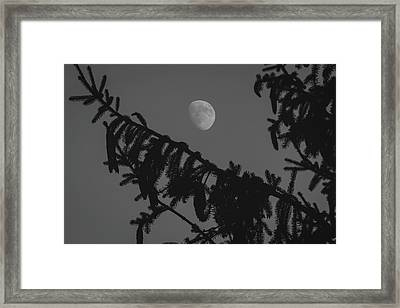 Waxing Gibbous Through The Evergreens Framed Print