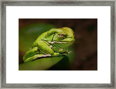Waxy Monkey Tree Frog Framed Print by Nikolyn McDonald