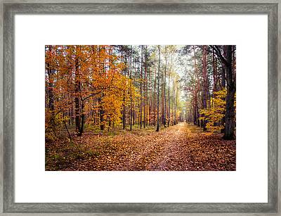 Way Of Light Framed Print