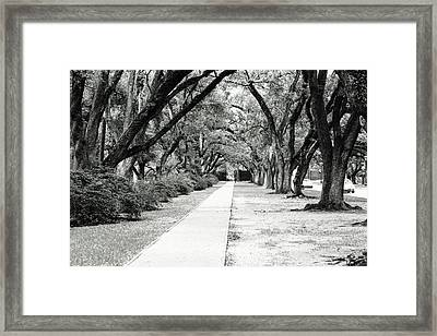 Way To Success Framed Print by Gracey Tran