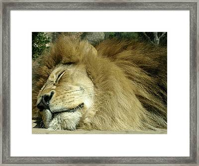 We All Like To Pass As Cats Framed Print